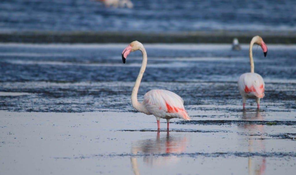 Terroir et Traditions : Flamant Rose