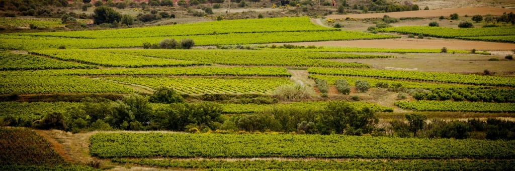 Terroir et Traditions : Picpoul de Pinet
